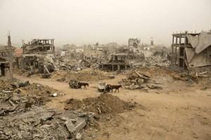 Gaza-mules-600x400